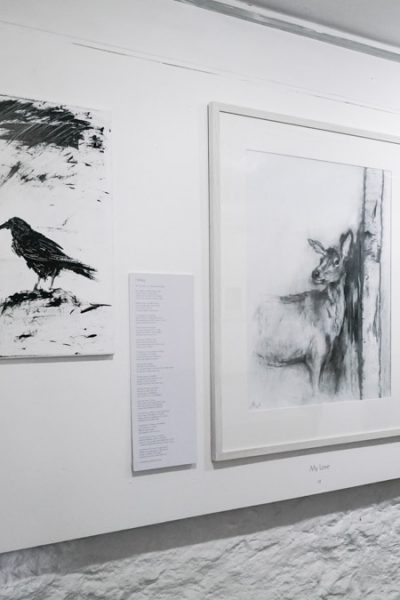 Framing an exhibition – 'Untamed' by Fiona Mackenzie